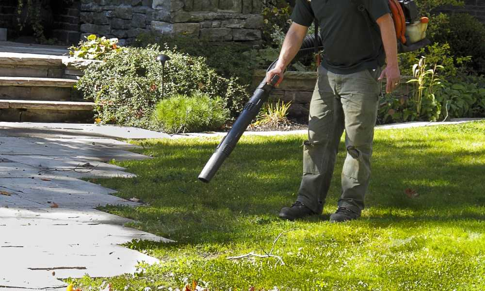 Best Leaf Blower Things to Know Before Buying One